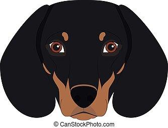 isolado, ilustração, cão, vetorial, fundo, branca, bassê