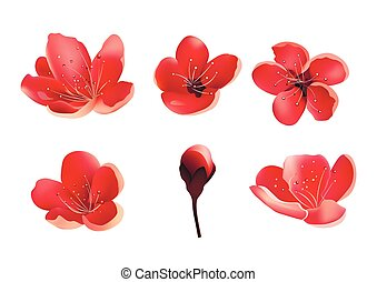 isolated., cereja, flor, sakura, árvore