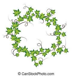 ivy., vetorial, verde, ilustração