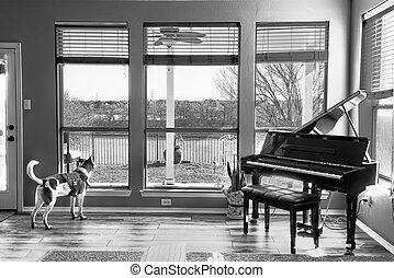 janela., olhar, cão, saída