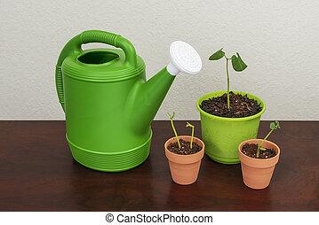 jardinagem, aguando, bebê, plantas, lata