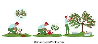 jogo, árvore, cuidado, ilustrações, cereja