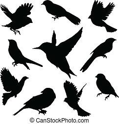 jogo, birds., vetorial