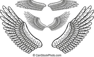 jogo, penas, pássaro, finely, desenhado, asas