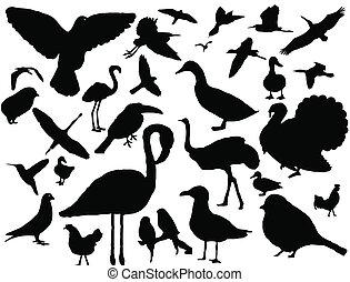 jogo, silueta, pássaros