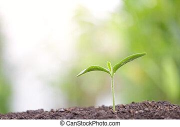 jovem, verde, crescendo, manhã, plantas