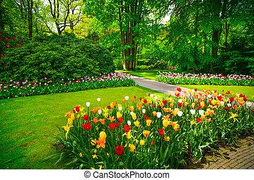 keukenhof, países baixos, jardim, árvores., tulipa, flores
