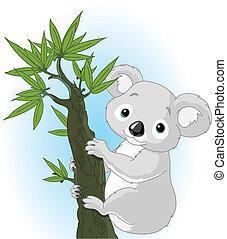 koala, cute, árvore