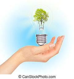 lâmpada, árvore, mão.