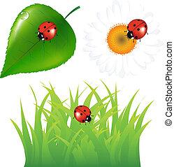 ladybug, jogo, verde