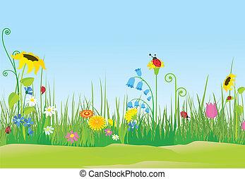ladybugs, flor, prado