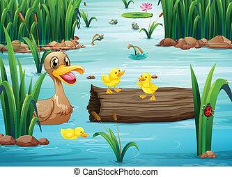 lagoa, animais