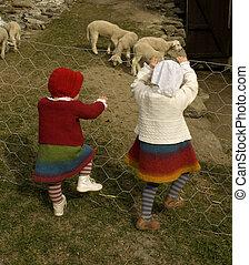 lambs., cerca, olhar, escalando, irmãs