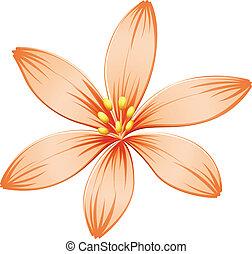 laranja, fresco, flor, five-petal
