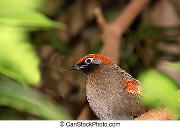 laranja, pássaro, encabeçado