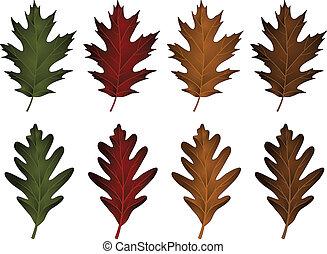 leaves-black, carvalho, branca