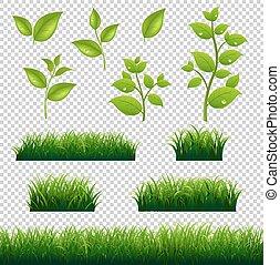licenças grandes, jogo, grama verde