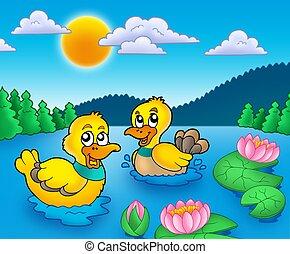 lillies água, dois, patos