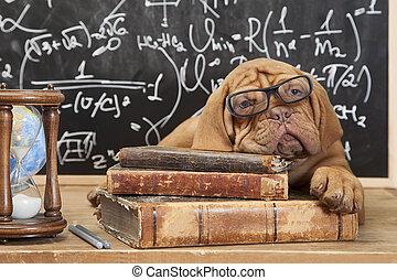 livros, filhote cachorro