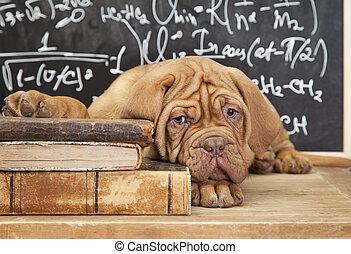 livros, filhote cachorro, pilha