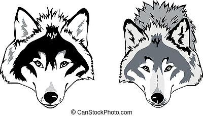 lobo, vetorial, cabeça