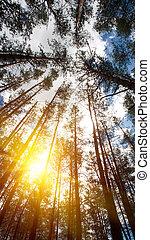 luminoso, natural, fundos, cima, olhando s, madeiras, crown.