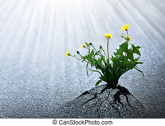 luminoso, vida, esperança