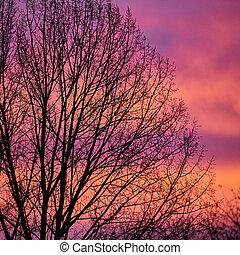 luz, árvore, manhã