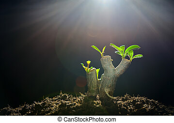 luz, árvore, manhã, ramo, broto, crescendo