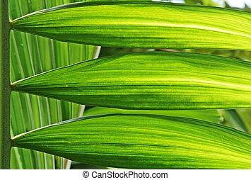 luz, folha, verde, manhã