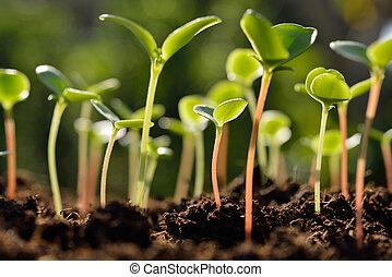 luz, manhã, verde, solo, crescendo, brotos, saída