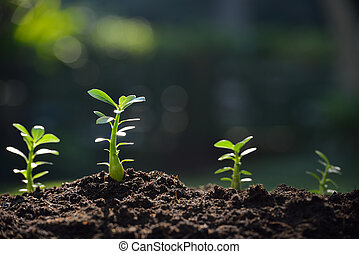luz, planta, jovem, manhã