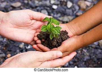 mão., árvore
