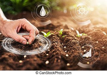 mão, fazendeiro, plantar, solo, sementes