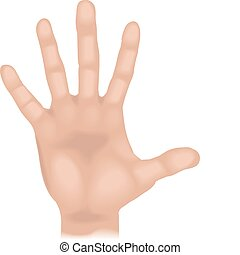 mão, ilustração