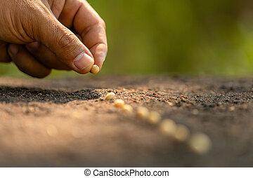 mão, plantar, marrom, soil., sementes, agricultor, crescimento, meio ambiente, conceito