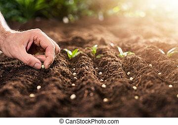 mão, solo, plantar, fazendeiro, sementes