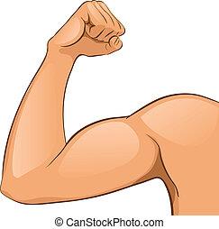 músculos, braço, homem
