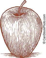 maçã, woodcut