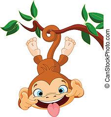 macaco, hamming