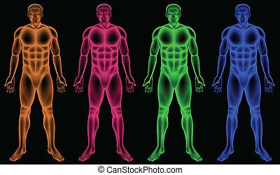 macho, corpos, colorido