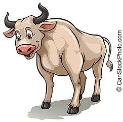 macho, vaca, um