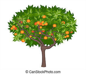 mandarin, árvore