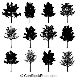 maple, árvores