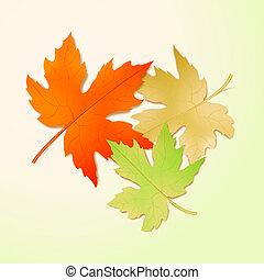 maple, leaves., outono