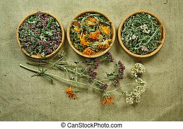 medicina, herbs., dried., herbário, medicinal, phytotherapy