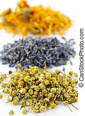 medicinal, secado, ervas