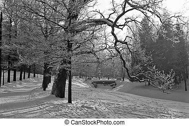 monocromático, parque, inverno