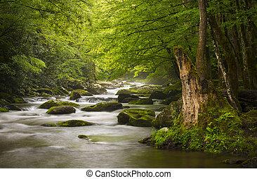 montanhas, grande, relaxante, natureza, esfumaçado, parque, gatlinburg, tn, calmo, nebuloso, tremont, rio, nacional, paisagem, scenics