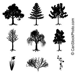 narcissus, bush, chamomile, árvores